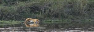 Kanha National Park,Bhedaghat,IT services provider